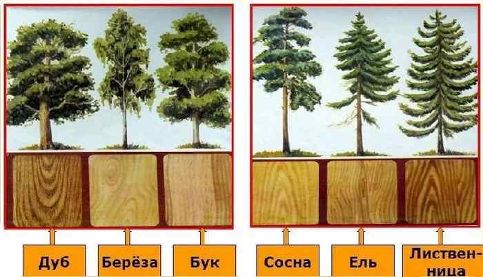основный свойства древесины