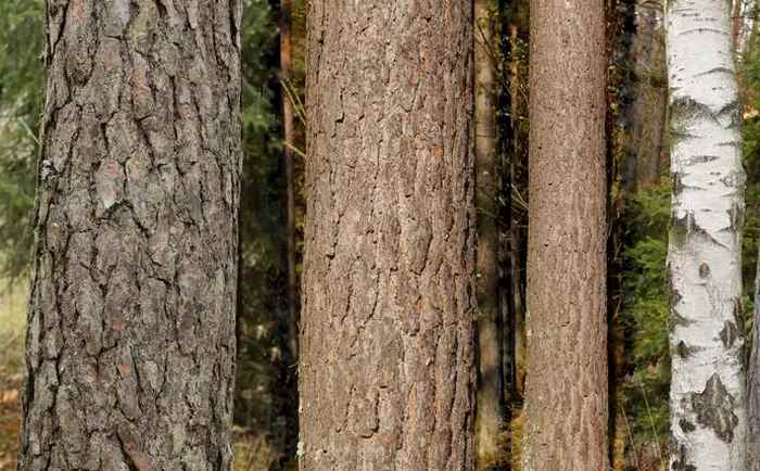 Свойства некоторых древесных пород